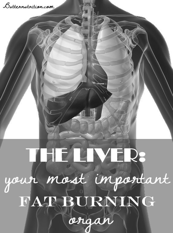 The LIVER: your most important fat burning organ! | Butternutrition.com
